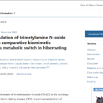 Insights in the regulation of trimetylamine N-oxide production using a comparative biomimetic approach suggest a metabolic switch in hibernating bears